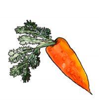 Продукт: Ферментированная морковь